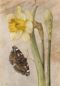 daffodil & butterfly