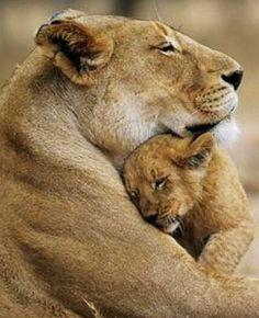 # animal #