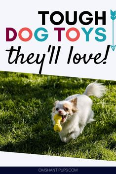 Everyone loves a good play session with some cool toys! However its always a bummer when a favorite toy is easily destroyed. Read on for ten awesomely tough dog toys that will last! Pet Dogs, Dogs And Puppies, Pets, Dog House Air Conditioner, Asian Dogs, Tough Dog Toys, Dog Breeds Little, Dog Grooming Shop, Cute Dog Collars