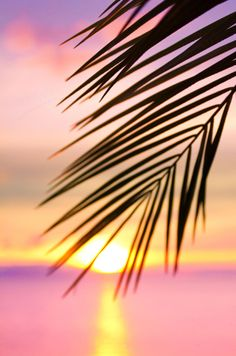 Be a palm tree Christian -- the more the winds buffet you, the deeper your roots go.  Of course, in this sunset, there is only a gentle breeze...