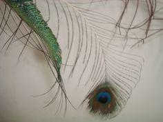 1° editorial -Tema: pegar um objeto que expressa um pouco do seu eu. (Pena de Pavão) produção: Alex Pascowicth fotografo: Alex Pascowicth