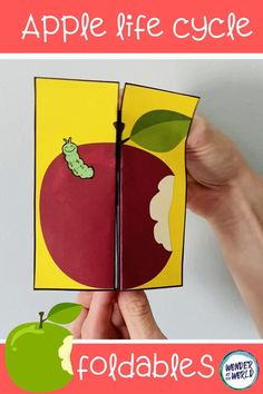 Tree Life Cycle, Life Cycle Stages, Apple Life Cycle, Life Cycle Craft, Apple Activities, Activities For Kids, Puppets For Kids, Butterfly Life Cycle, Apple Theme