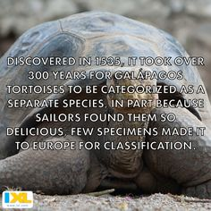 Food for thought: giant tortoises were dangerously edible. #trivia