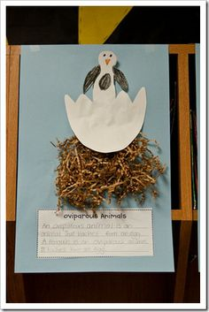 Cool idea for oviparous animals that hatch from eggs, dinosaurs would be fun!