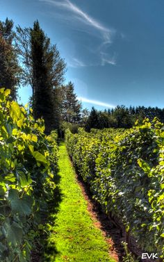 #winery