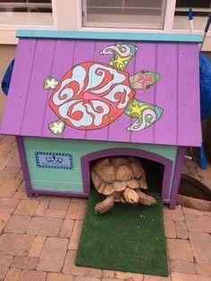 Heated Tortoise House - Must Have Tortoise House, Tortoise Food, Tortoise Habitat, Tortoise Table, Turtle Habitat, Sulcata Tortoise, Baby Tortoise, Turtle Enclosure, Tortoise Enclosure