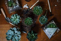 Garden Guide, Garden Tools, Wabi Sabi, Small Gardens, Outdoor Gardens, Organic Gardening, Gardening Tips, Garden Express, Gardening Magazines