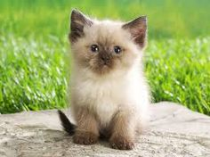 My dad wants one of these kittens or cats, but I wants all kinds of cat ( but my dog is going to freak out ).