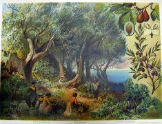 Oljypuu.jpg 1000×765 pikseliä