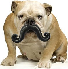 Humunga Stache Rubber Dog comedy toy -- Check out this great product. (This is an affiliate link) #Pets