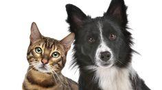 Bei hohen Tierarztkosten empfielt sich eine Tierkrankenversicherung. Doch die haben ihre Tücken. 'Finanztest' hat die Tarife unter die Lupe genommen.