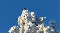 A hawk is perched on a snowy tree in Hawk Bend, Ore. (Bhein)   We Asked, You Shared: Beautiful Winter Wonderland Photos - weather.com