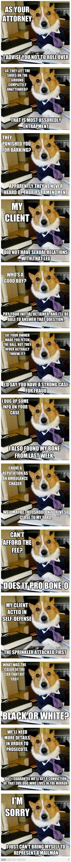 It& totally acceptable to take a break from your CLE online courses to laugh at lawyer dog. Source by marinolegal The post The Best Of The Lawyer Dog Meme appeared first on Verschiedene rechtliche Informationen. Animal Quotes, Animal Memes, Funny Animals, Animal Funnies, Work Memes, Work Humor, Funny Cute, The Funny, Law School Humor