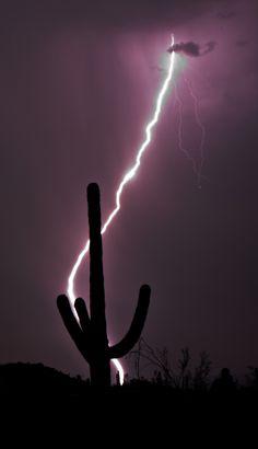 Saguaro Lightening Strike