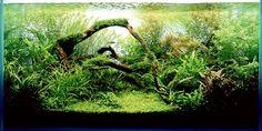 аквариум с живыми растениями - Поиск в Google