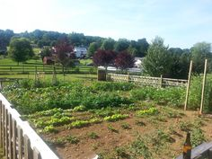 Large Vegetable Garden Layout in Full Bloom