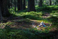 Der Reinigungsplatz im Hachauer Wald Plants, Tourism, Ghosts, Woodland Forest, Places, Plant, Planets