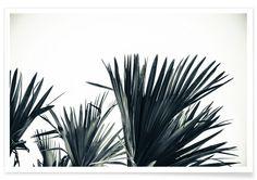 Palm Shade 3 en Affiche premium par Christoph Abatzis   JUNIQE