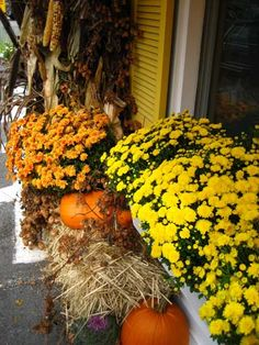 Love the idea of using yellow and white mums with some orange along with hay and pumpkins.