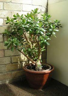 Feng shui verde on pinterest feng shui houseplant and - Feng shui para la prosperidad ...