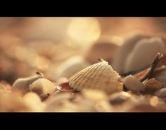 Sea Shells by Nishanth Rao, via 500px