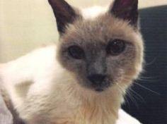 <p>Selon le <em>Guinness Book</em> des records, Scooter, à plus de trente ans, est le chat le plus vieux du monde. Il vit paisiblement avec sa famille adoptive dans l'état du Texas aux Etats-Unis.</p>  <p>Scooter vient d'être reconnu officiellement comme étant le chat le plus vieux du monde. Incroyable mais vrai, puisque c'est le Guinness Book des Records, on ne peut plus officiel, qui a décerné cet extraordinaire prix à cet adorable félin.</p>