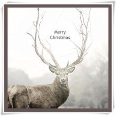 Merry Christmas Huge Buck Winter Deer