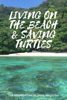 Living on a beach, saving turtles in Malaysia!