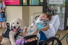 Paralyzed 6-Year-Old Meets Her Future Golden Retriever Service Dog and Bonds with Pup Instantly Golden Retriever Names, Handmade Dog Collars, 6 Year Old, Girl Falling, Service Dogs, Baby Dogs, Dog Days, Dog Training, Fur Babies