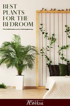Clean Bedroom, Bedroom Art, Bedroom Furniture, Peace Lily Plant, Best Air Purifying Plants, Bedroom Plants, Nature Decor, Cool Plants, Air Purifier