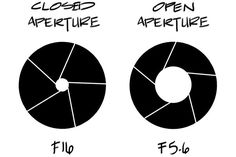 Understanding Aperture in Photography - Bears with Cameras tx
