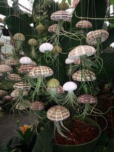 30 Cool and Unique DIY Garden Globes - adamsmanor Unusual Plants, Exotic Plants, Cool Plants, Exotic Flowers, Air Plants, Garden Plants, Indoor Plants, House Plants, Succulent Gardening