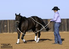 Groundwork Exercise Throw to a Stop Goal: To be able to lunge the horse in a circle around you, then throw the end of the lead rope over his topline and have him immediately relax and come to a stop, staying parallel on the circle. Horse Gear, Horse Tips, My Horse, Baby Horses, Horses And Dogs, Show Horses, Haflinger Horse, Reining Horses, Horse Information