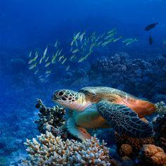 Meeresschildkröten navigieren mit Magnetfeldern