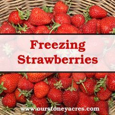 Freezing Strawberries is a quick and easy way to preserve that harvest for the garden. This way you have some tasty garden grown fruit all winter!