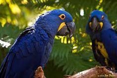 pássaros maravilhosos - Pesquisa Google