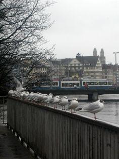 Morning Meeting, Zurich, Switzerland