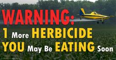 ***VOTE NO GMO BY USING YOUR DOLLARS TO PURCHASE NON GMO FOODS*** New, More Toxic Breed of Crops Gain Approval: Instead of saving the environment and human life, the USDA deregulates Dow Chemical's new genetically engineered crops, which are resistant to glyphosate. http://articles.mercola.com/sites/articles/archive/2014/10/28/new-toxic-genetically-engineered-crops.aspx