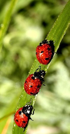 How much do water drops weight to a Lady Bug? All the atoms in the water jiggling transferring the heat to the insect, Is it aware it's wet?