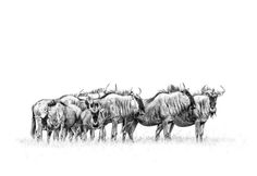 Image result for african wildlife bw prints