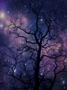 night, sky, tree