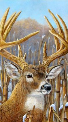 Bambi, Deer Drawing, Moose Art, Cows, Drawings, Animals, Animales, Animaux, Sketches
