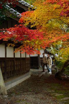 Autumn In The Japanese Garden Wallpaper