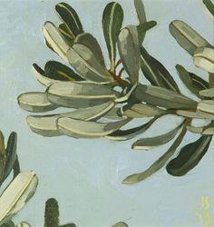 WEB_Banksia_Integrifolia_2013_3_30_x_30cm_Oil_on_linen_on_board_photo_JS14