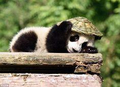 Kung Fu Panda is real! ❤️ 1/4
