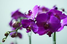 Image result for images of purple orchid flower