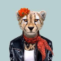 Cheetah - Zoo Portraits