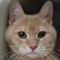 Mugsy - ADOPTED!! Left in a carrier by a lamppost in the driveway leading to our shelter on Meredith Center Road, the now named MUGSY had a somewhat ignominious arrival. Could we assure her the top spot in your home - she deserves to be the one and only after all she has endured. #adopt #rescuepets #shelterpets