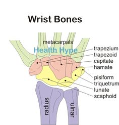 Bones of the Hand and Wrist | Carpal Bones