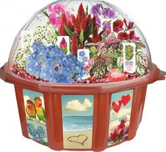 Spread the love and have fun with this DuneCraftThe Love Dome Terrarium. Rainbow Resource, Anthropologie Home, Pink Plant, Green Toys, Bunch Of Flowers, Inexpensive Gift, Grow Your Own, Sport, Valentines Diy